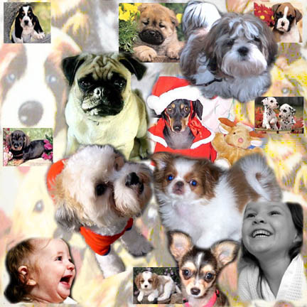 Puppies on Com 562 948 5342 Carmen Clowns4all Com Puppies For Parties Los Angeles