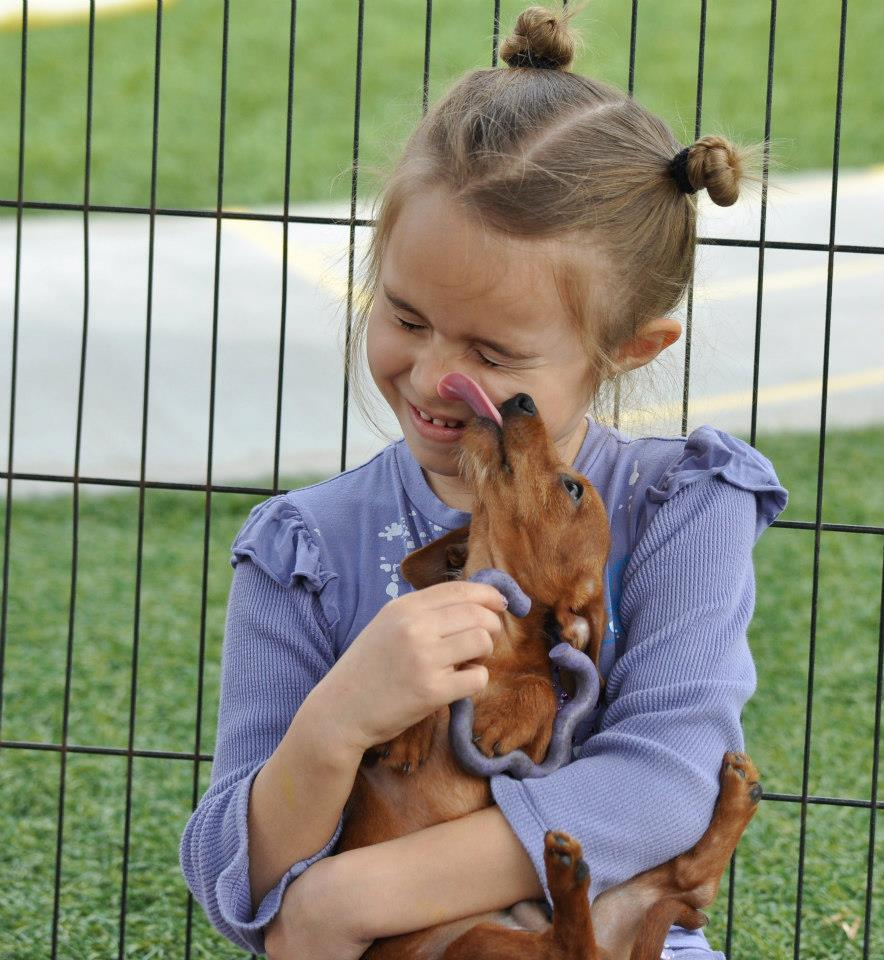 puppy party rental CharmandHappy.com irvine
