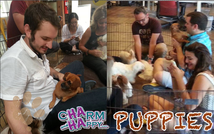 CharmandHappy.com puppies for parties Los Angeles Hollywood Beverly Hills El segundo